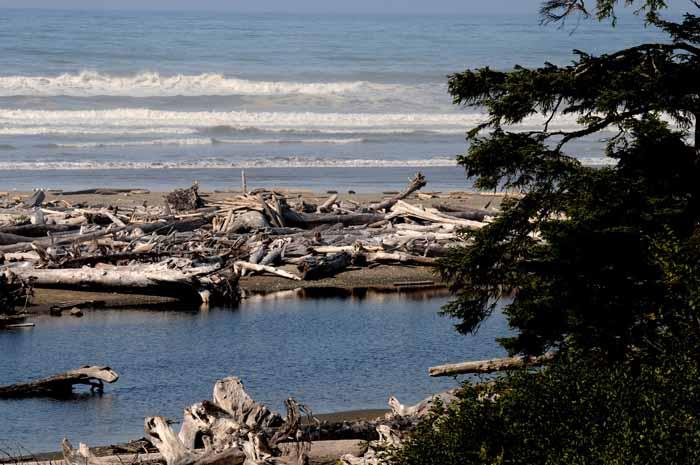 Pacific Coast, Olympic NP,WA