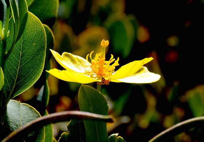 Aboretum,UC Santa Cruz(California)
