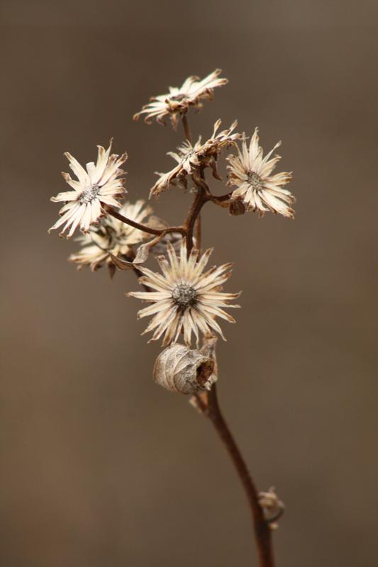 Dried Flower3.jpg