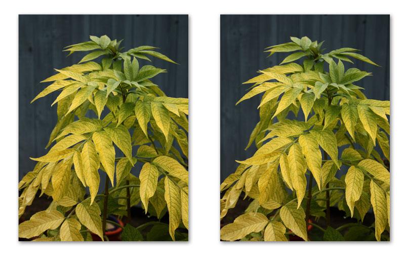 3D Leaves2.jpg