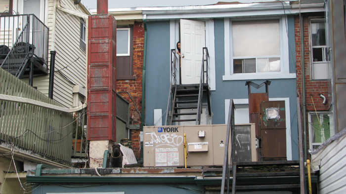dog on a rooftop