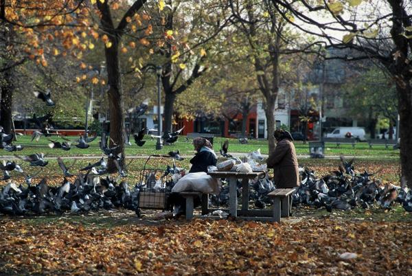 Women feeding pigeons, Toronto