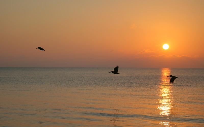 Sunrise in May Birds