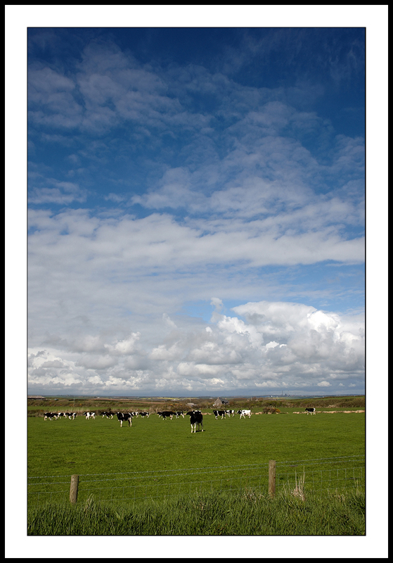 Sky and cows