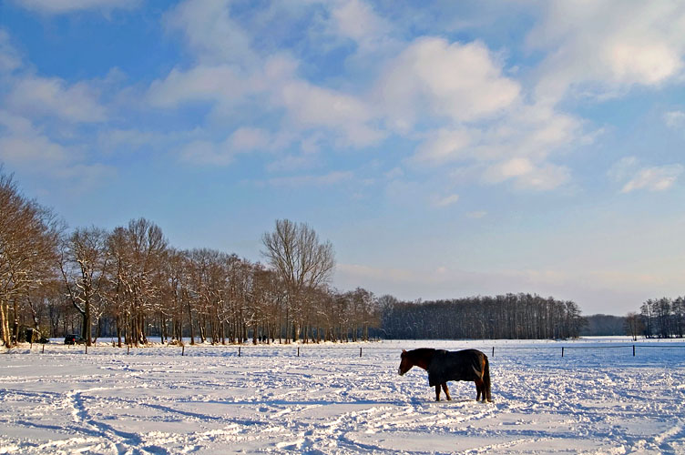Glimmen, horse in snow