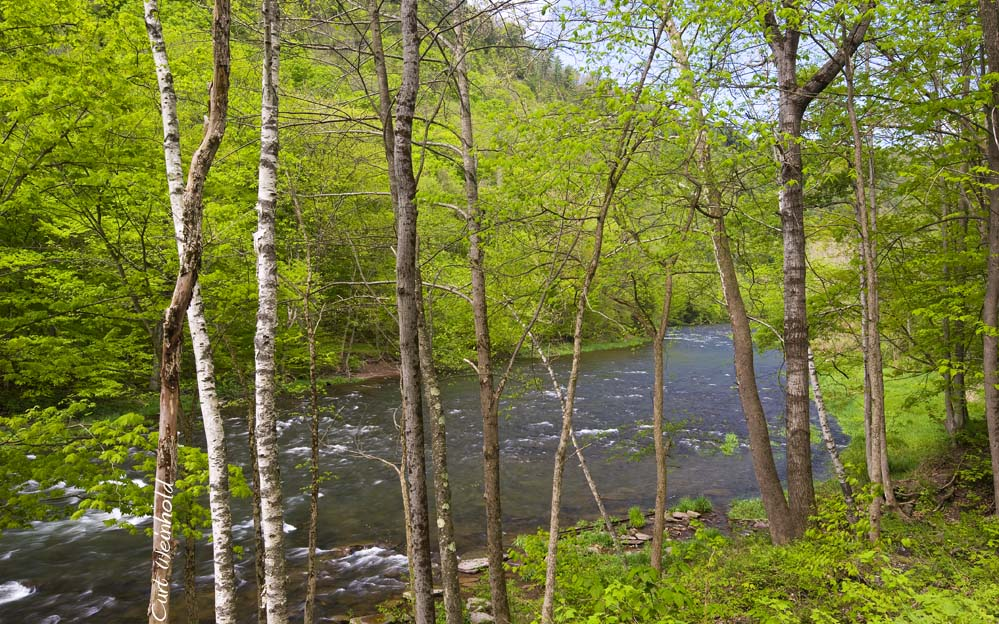 Pine Creek at Little Four Mile Run