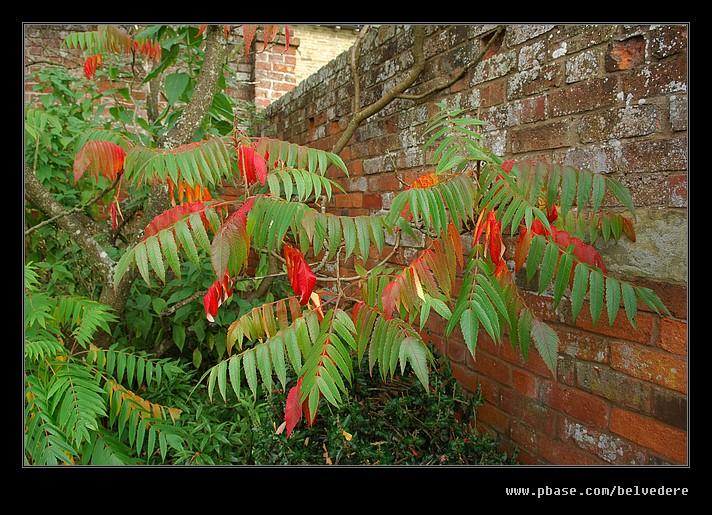 Croft Castle Walled Gardens #27