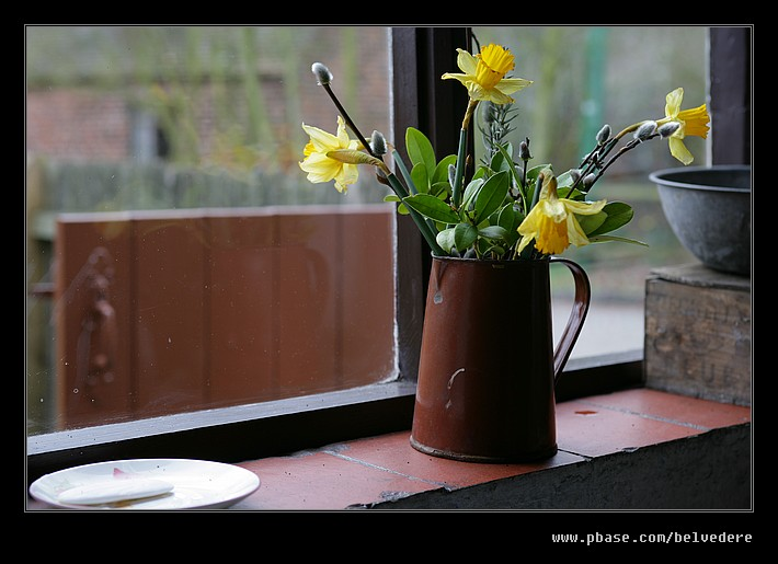 Wash House Daffodils, Black Country Museum