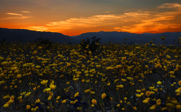 Yellow Blooms Capture the Last Rays of the Sun