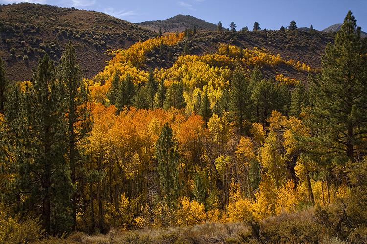 Lundy Creek Colors