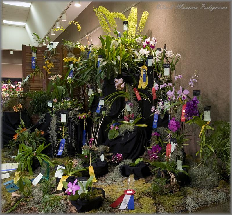 Atlanta Orchid Society Entry