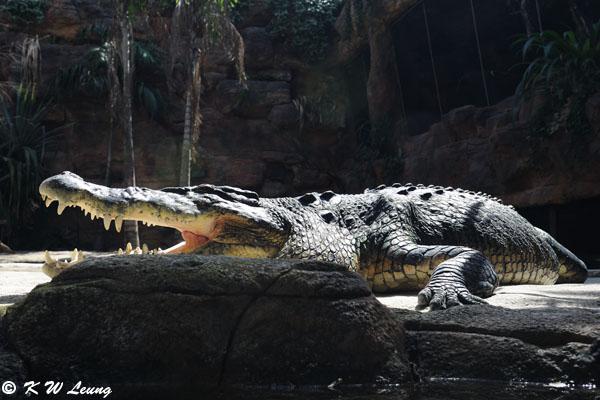 Crocodile (DSC_3543)
