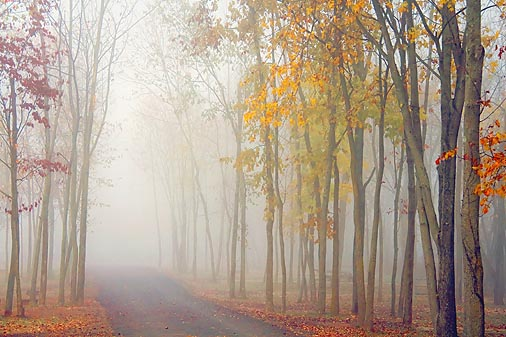 Autumn Morning Fog 20081030