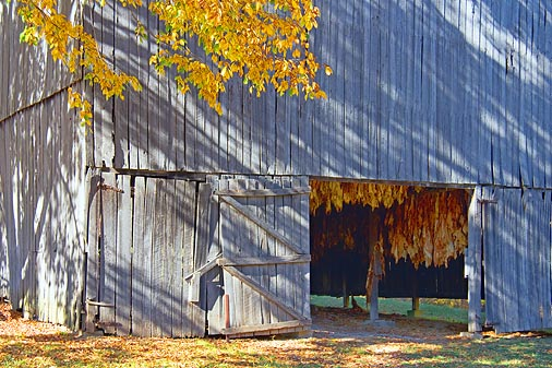 Tobacco Barn Door 24776