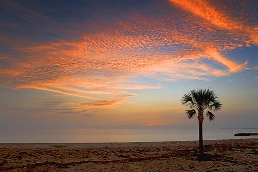 Palm Tree At Sunrise 28142