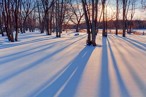 Tranquil Snow 11597