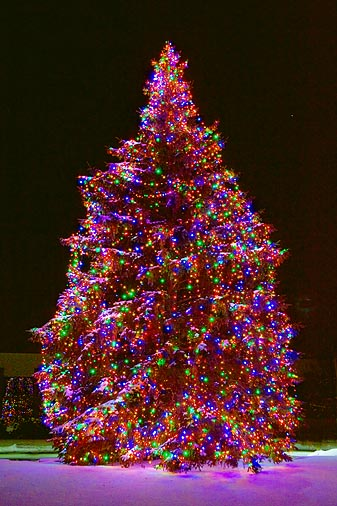 Gilmores Christmas Tree 20091217