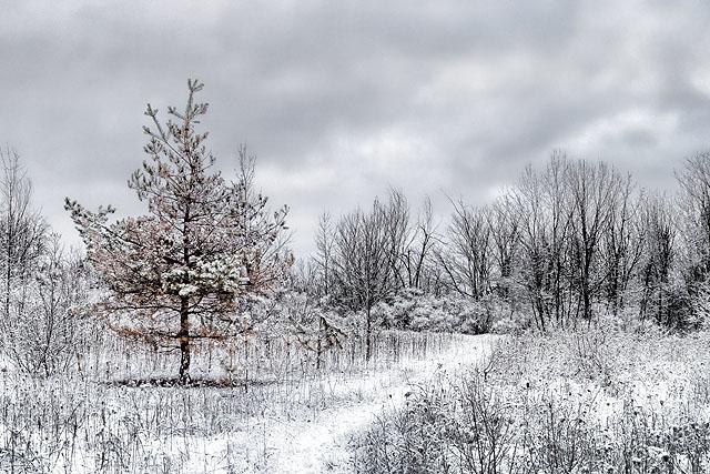 Snowy Trail 20111223