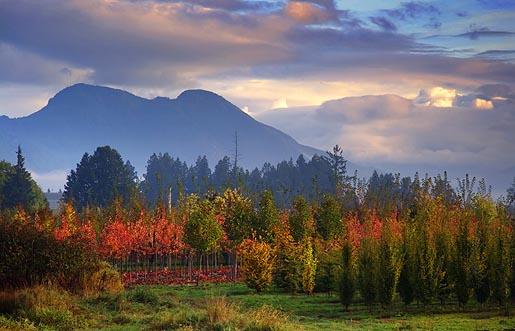 Mountain in a Dawn Mist 20051013