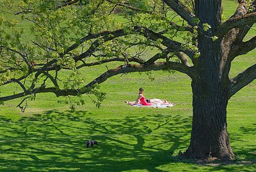 Arboretum Sunbathers 89340