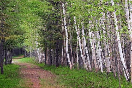 Lime Kiln Trail 89289