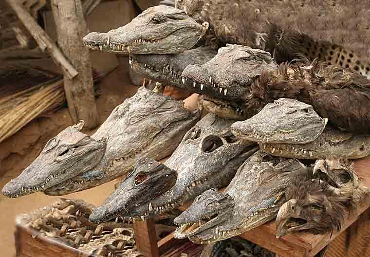 Crocodile heads in the voodoo fetish market in Lomé.