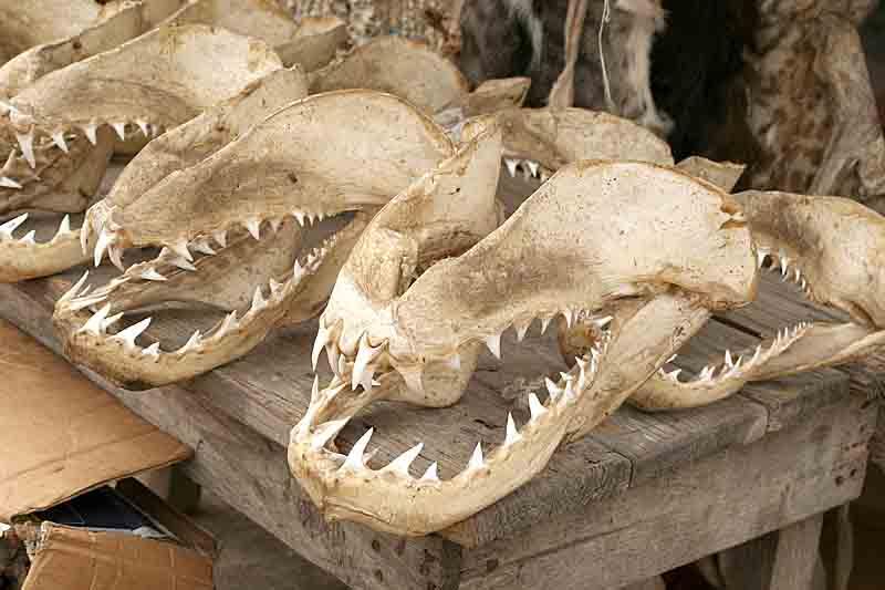 Sharks in the voodoo fetish market in Lomé.