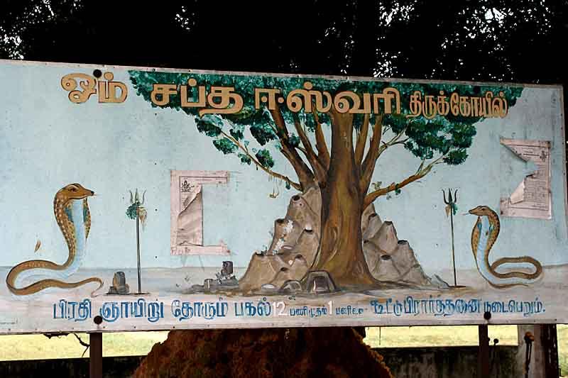 Snake shrine Om Sati between Mamallapuram and Kanchipuram. http://www.blurb.com/books/3782738