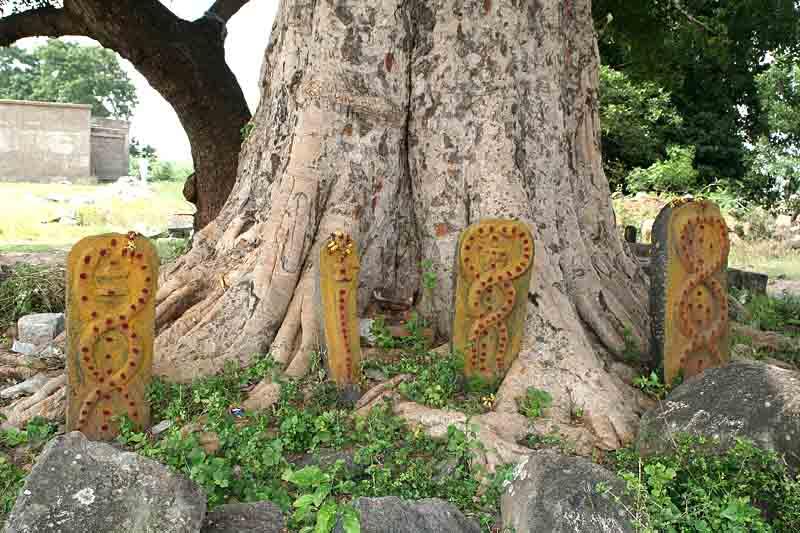 Snake worship near Kanchipuram. http://www.blurb.com/books/3782738