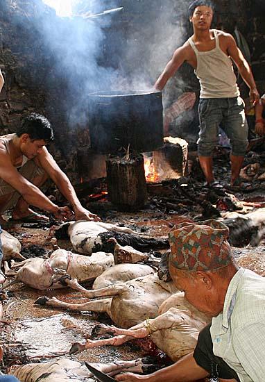 The sacrificed goats prepared to be taken home, Dakshinkali, Nepal.