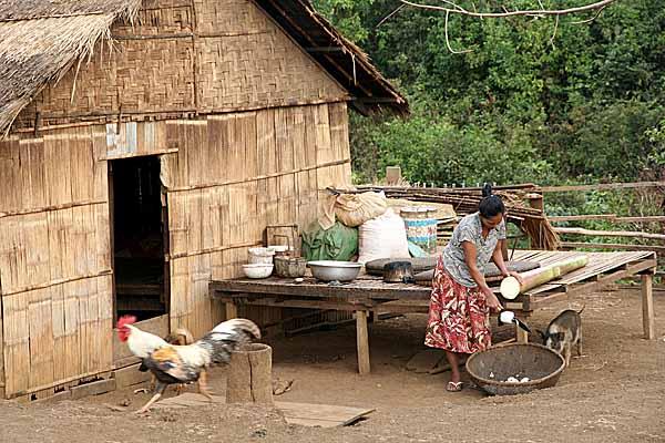 Phnong lady cutting a banana stem for pig feed. Pu Tang Village, Mondulkiri, Cambodia