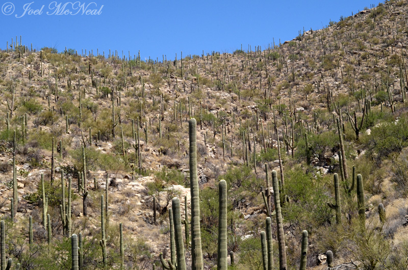 Saguaro-covered Santa Catalina foothills