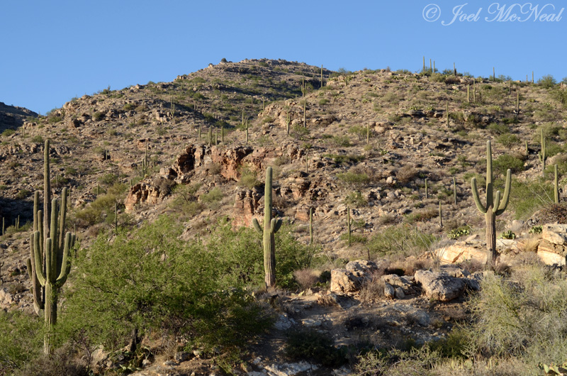 Saguaro-covered Santa Catalina foothills