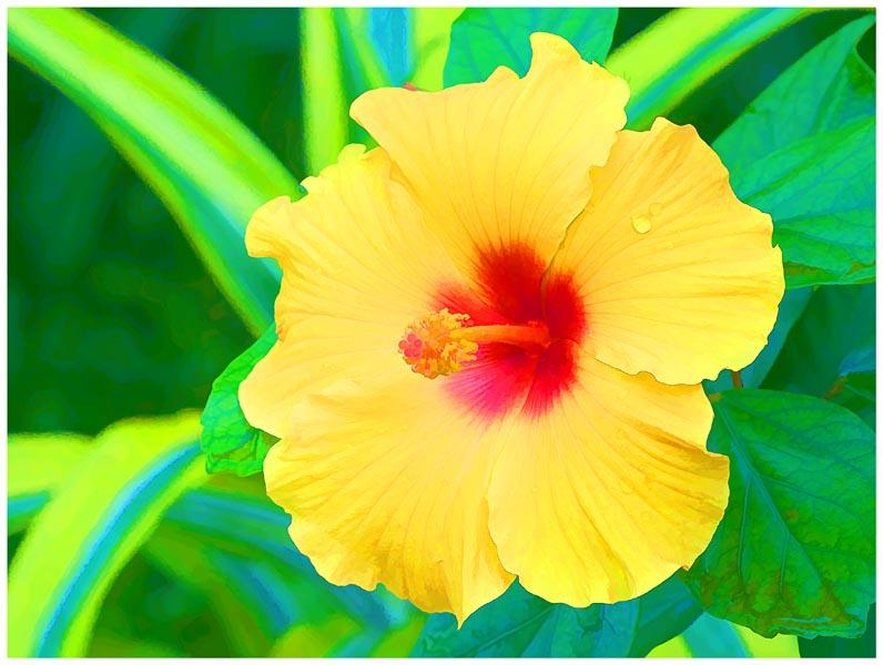 Yellow Hibiscus (painting)