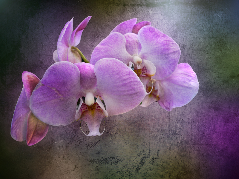 Soft and strong like an orchids perfume
