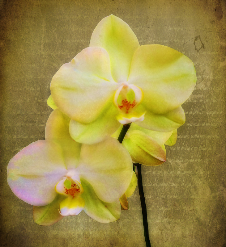 Memories of an orchid...