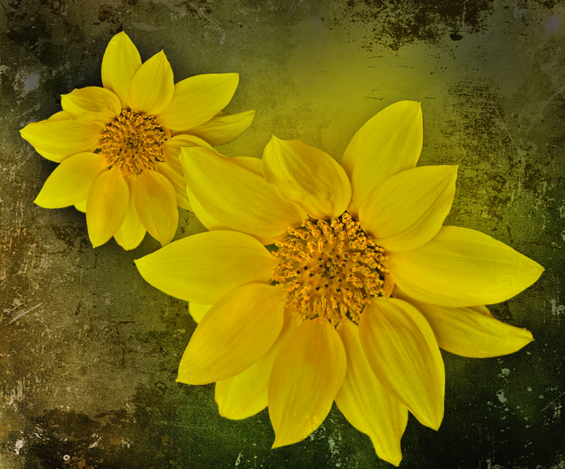 The flowers of the sun...