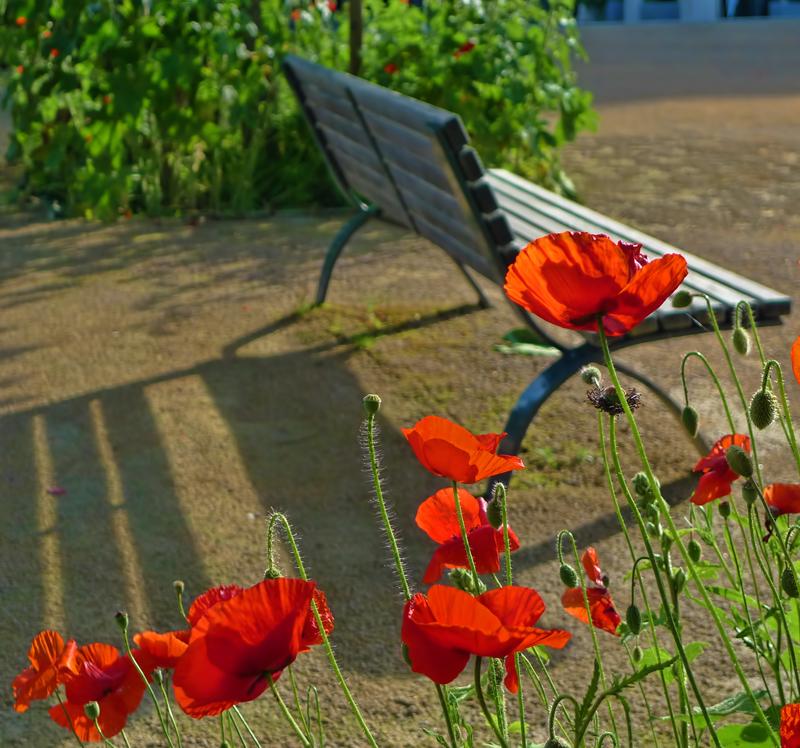 Urban poppies...