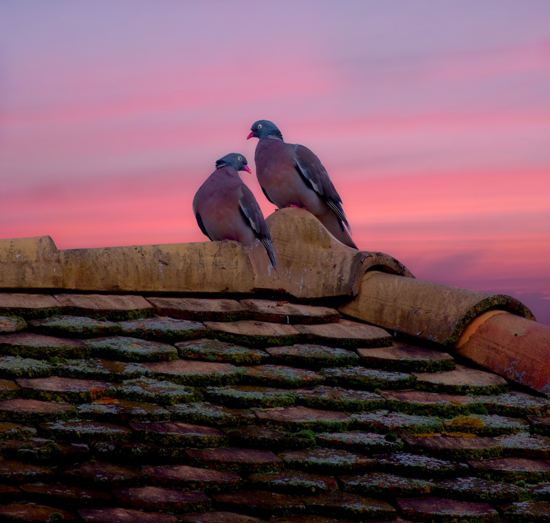 Sunrise behind the roof top…