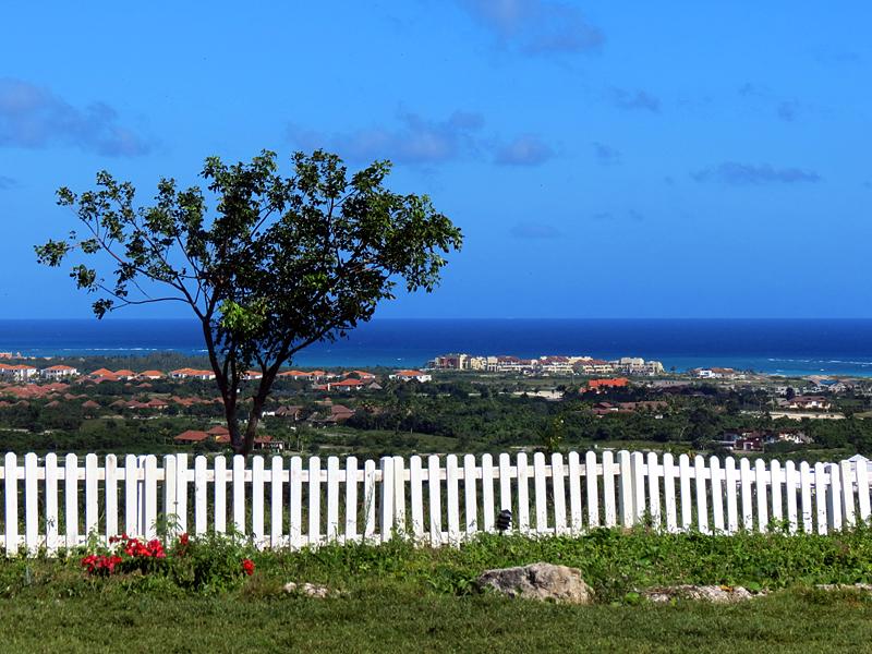 un arbre devant Cap Cana