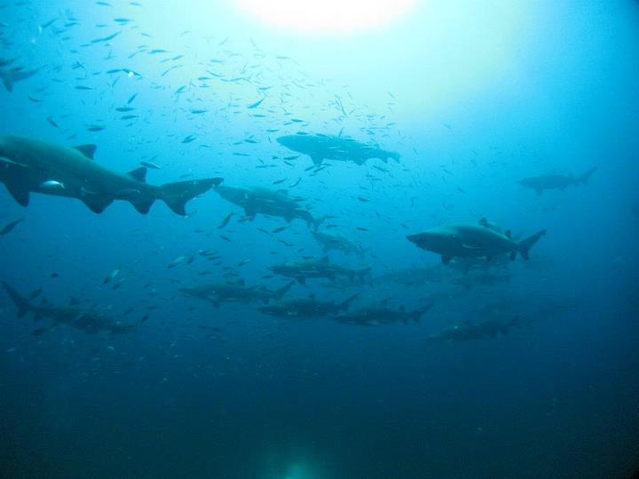Carib Sea 7-15.jpeg 2.JPG