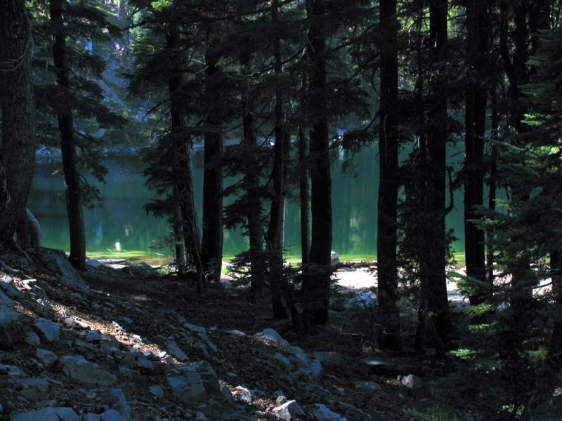 Magee Lake viewed thru the trees