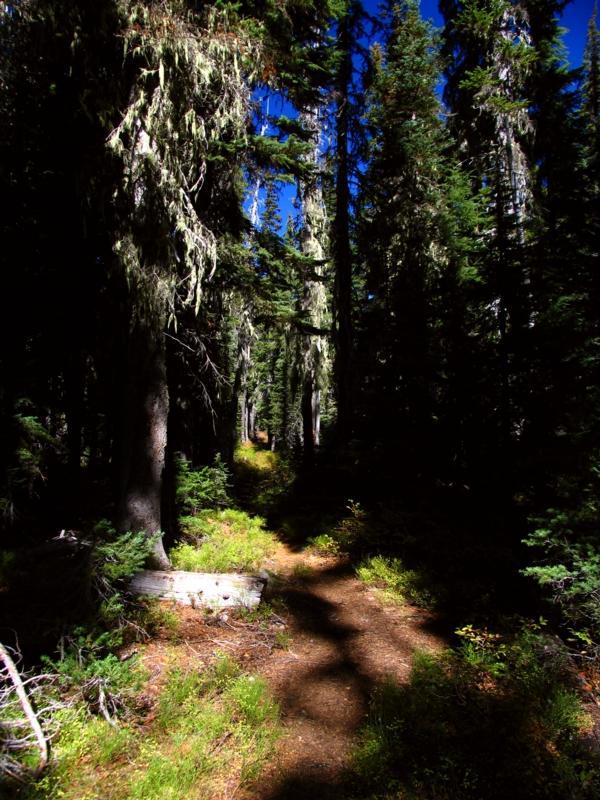 Old Oregon Skyline trail near Island lake