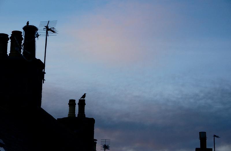 23rd February 2011 <br> light mornings
