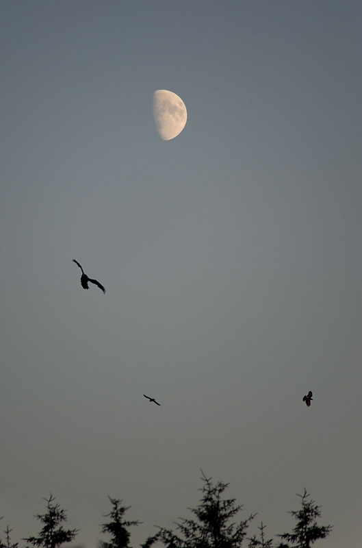 27th July 2012 <br> moon
