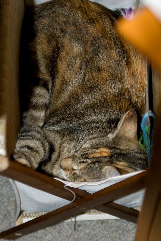 Kitten In A Basket 03/11