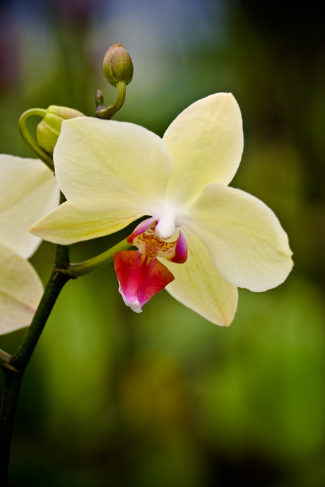 Orchid RD-505