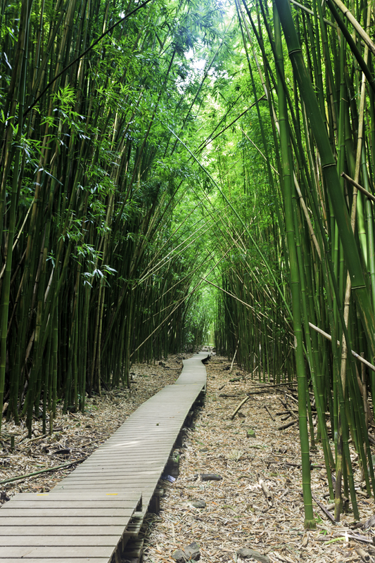 Bamboo forest Path 31651