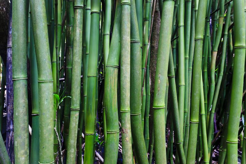 Bamboo 31653