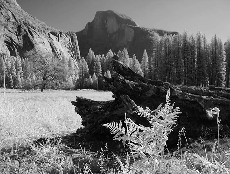 Half Dome (infrared) from Cooks Meadow
